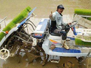 8条、5条植えの田植え機を使ってどんどん植えていきます。