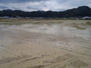 約40haの田んぼに田植えを行う当社。スタッフで手分けして作業を行います。