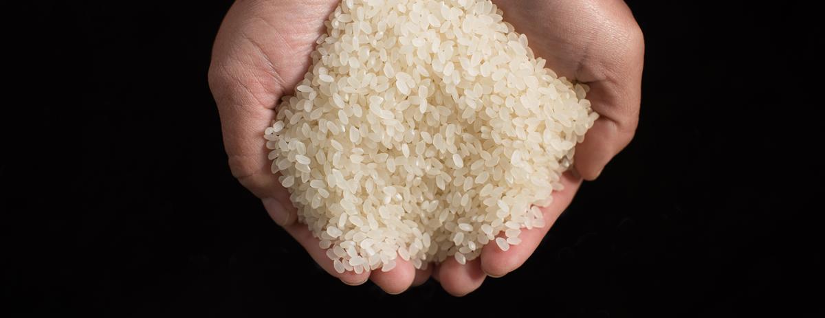 米づくり写真